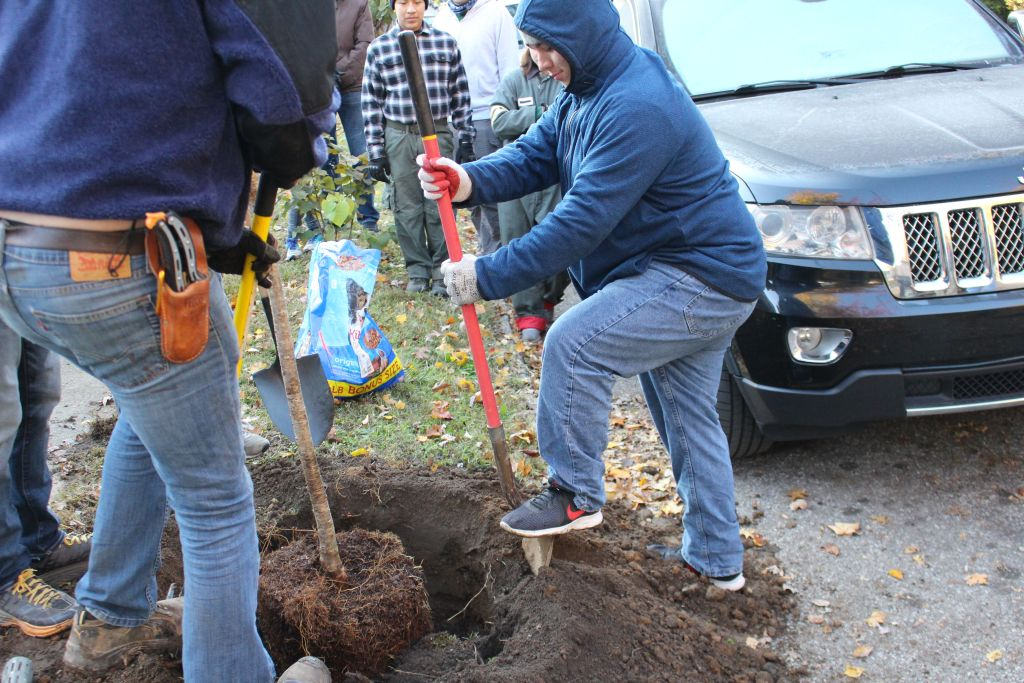 The Rocks helped plant trees in the Highlands Nov. 2.
